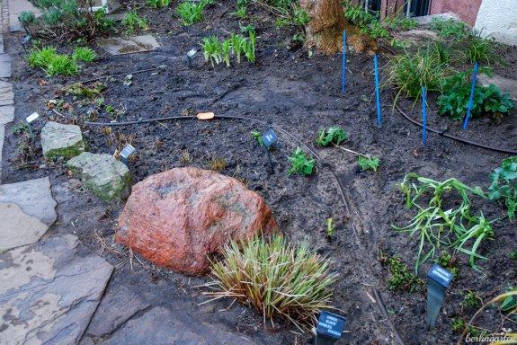 Zu guter Letzt wird das Beet kräftig gewässert, damit sich Wurzeln und Boden gut verbinden. In die freien Flächen kommen später noch ein paar einjährige Blumen wie Hornveilchen, um einen sofort hübschen Anblick zu bieten