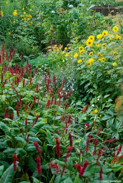 Staudensonnenblumen mit Schönaster und Knöterich