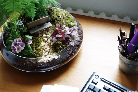 Miniaturgarten auf dem Schreibtisch