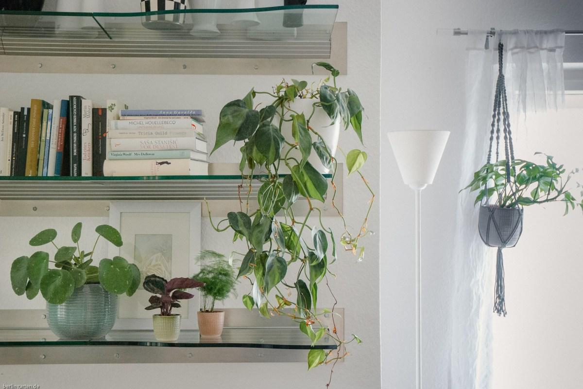 Zimmerpflanzen im Raum verteilen