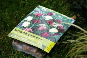Schachbrettblumen sind ideal: hoch genug und mit wenig Laub