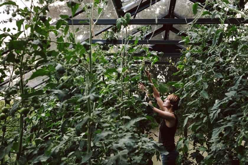 Susann im Gewächshaus mit Gurken