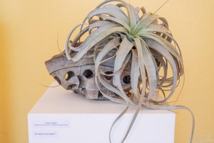 Ulrike Vogler: Natur wird siegen. Zumindest über Waschmaschinen