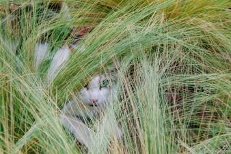 Katze im Gräsergarten