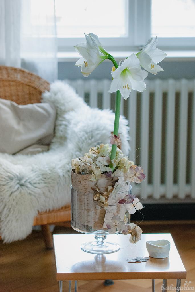 Amaryllis winterlich
