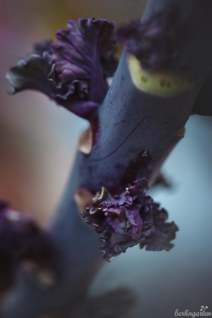 Röschen Flower Sprouts