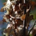 photo of birch bark