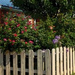 garden with picket fence