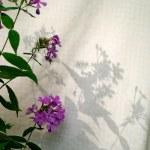 pink phlox shadows on yellow gingham sheets