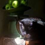 black cat on cabinet with apples