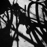 shadows of bicycles