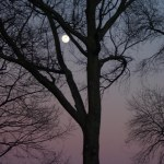 moonrise in bare tree