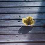 yellow leaf in blue wood