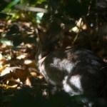 wild rabbit under tree