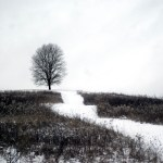 photo of tree at top of hill