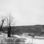 two bare trees in field by road
