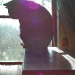 black cat at window with sunflares