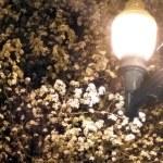 blossoming trees at night