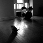 cat and drum set in empty room