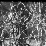 branches and vines