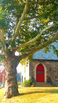 The reaching old sycamore by Church of the Atonement Episcopal church. Love that red door.