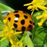 Inspiring Ladybug