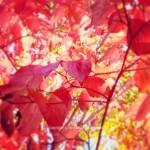 Oh, Autumn