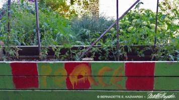 Peace Tomatoes