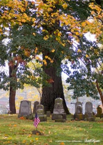 Under a Spreading Oak
