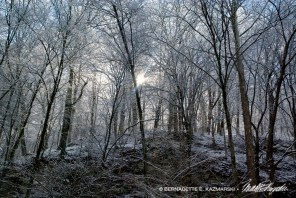Trail 38