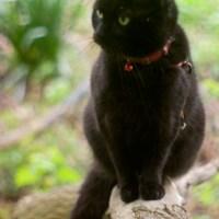 Tree Panther