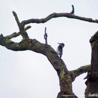 Interesting Composition of Bird and Tree
