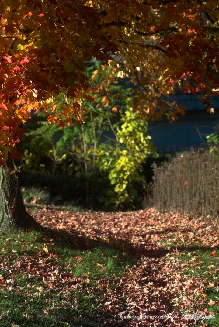 Creekside Path