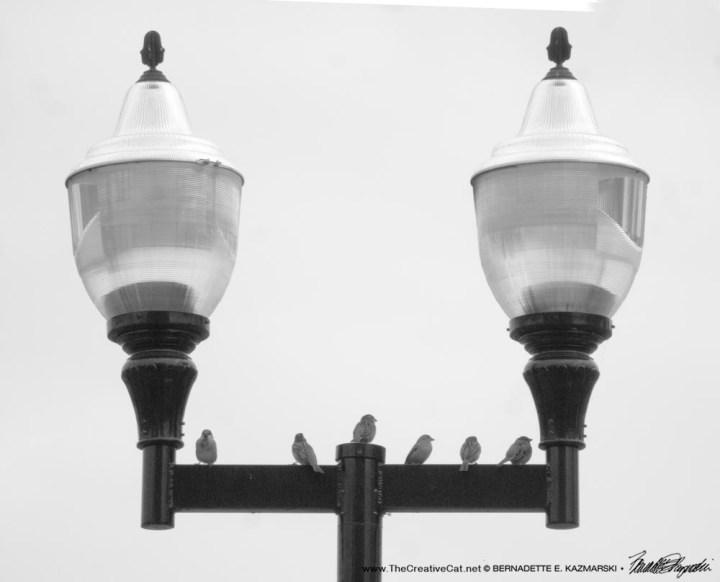 Parking Lot Sparrows