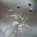 dried wildflowers in snow