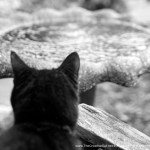 black cat at birdbath