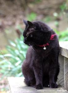 photo of black cat