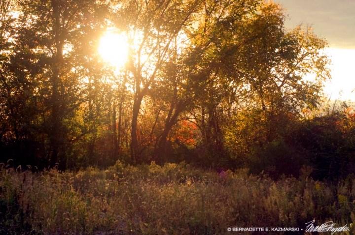 burnished sunset