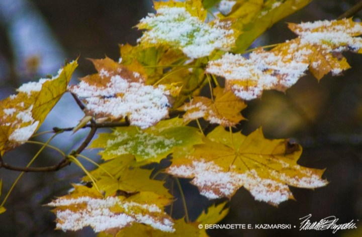 snow on yellow leaves