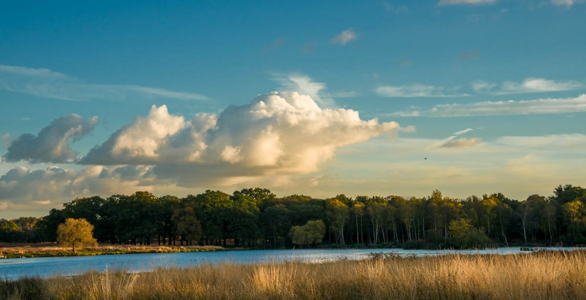 Cloud over Richmond Park