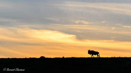 Gnou au lever du soleil