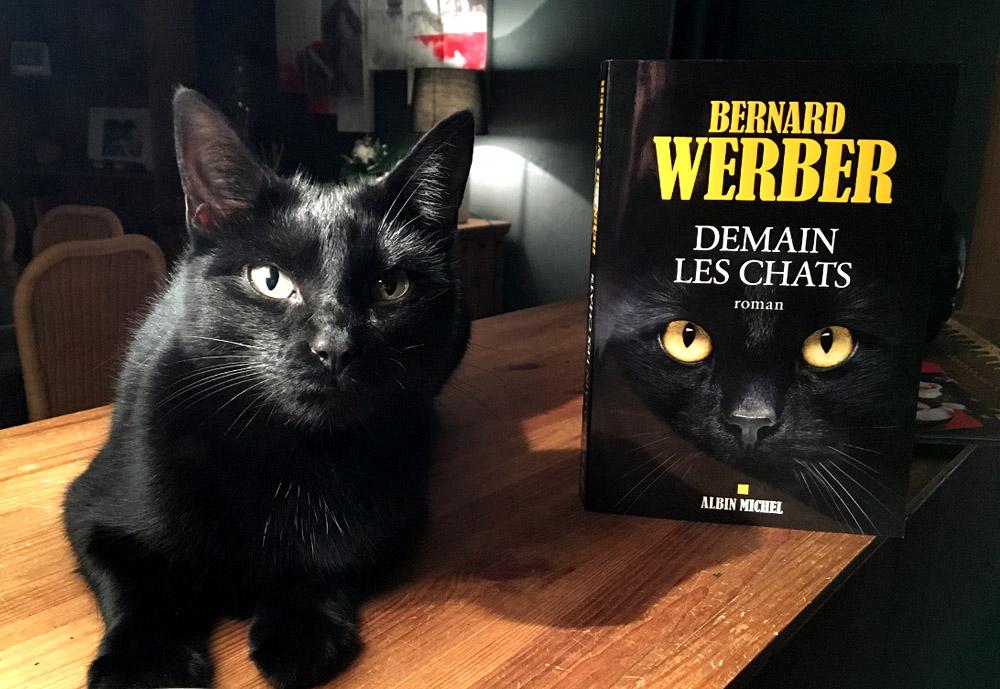 """Résultat de recherche d'images pour """"demain les chats"""""""
