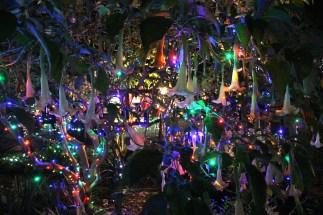 Garden of Lights - Flowers of Light
