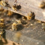 Why You Need Bee Removal Services