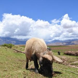 Maras, Vallée Sacrée, Pérou