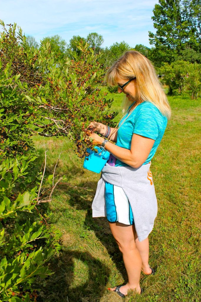 Enjoy an afternoon in the sunny blueberry garden picking blueberries and absorbing the farm atmosphere.