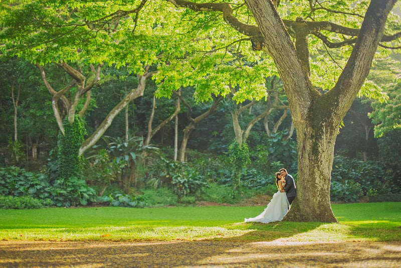 Bride and groom portrait under tree destination wedding Hawaii