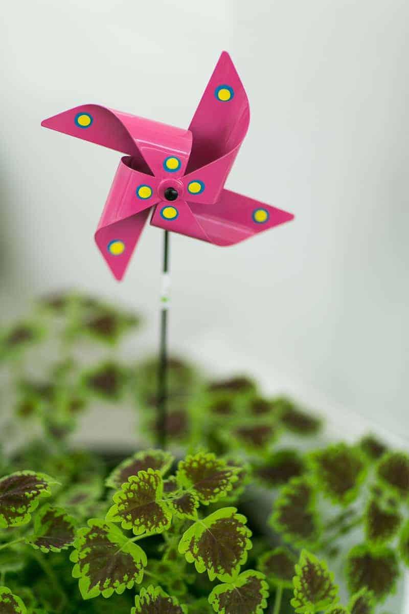 Pinwheel Themed Wedding with Colourful Sunflowers Backyard Inspiration-15
