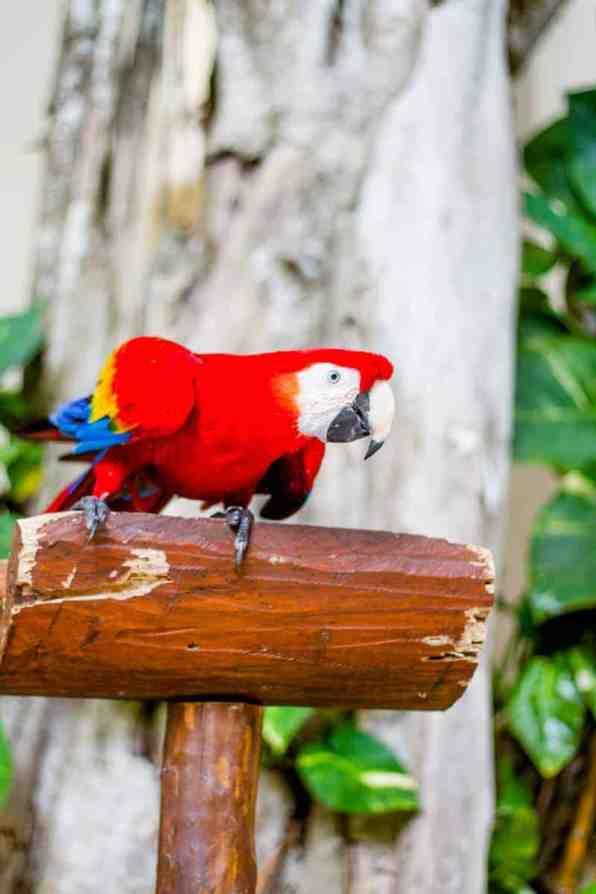 Mexico Honeymoon Travel Guide Playa Del Carmen 2015 (37) - Copy