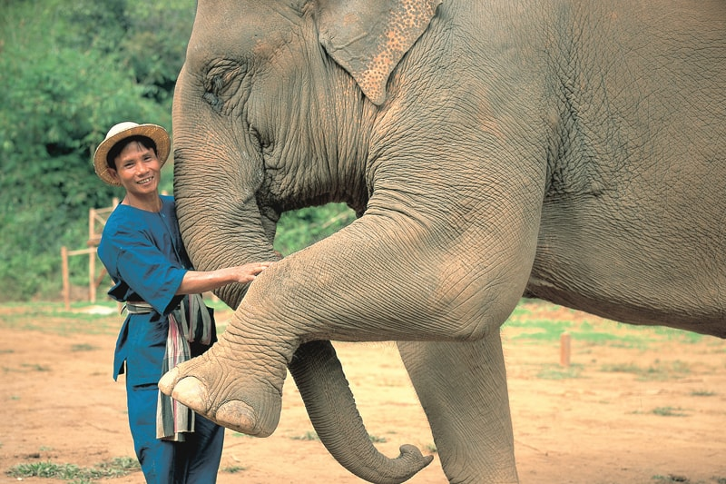 10 Unique honeymoon activities - elephant mahout